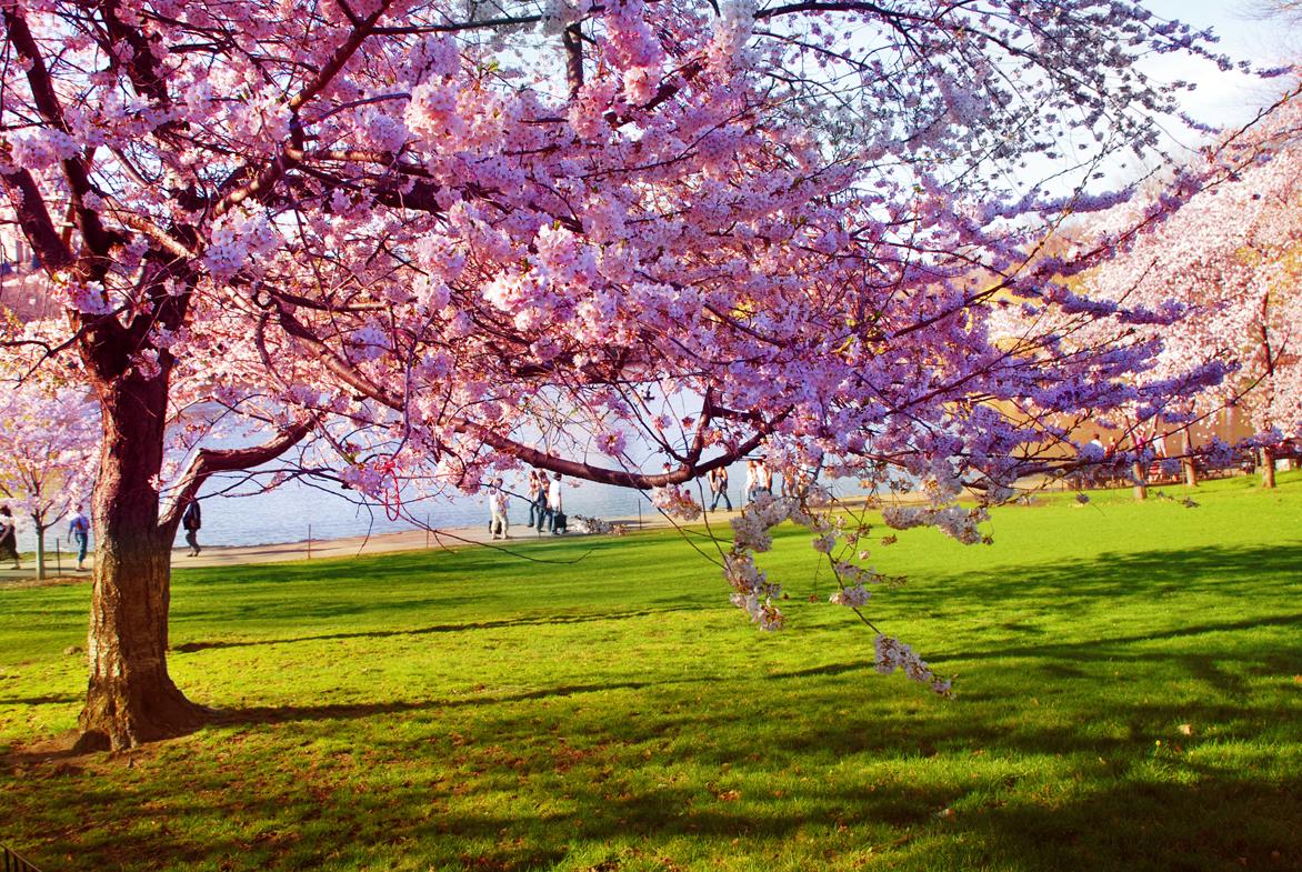 spring-1373199.jpg